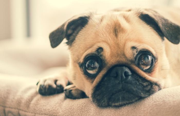 Lemmikloom üürikorteris: hirmul on suured silmad
