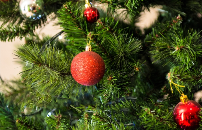 Kuidas valida jõulukuusk