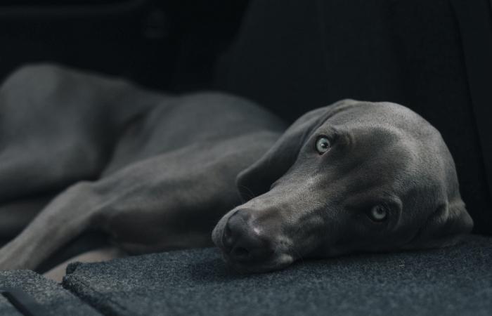 Kuidas koos koeraga valutult kolida?