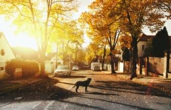 Ridaelamu kasutuskord – võimalus vältida erimeelsusi naabrite vahel