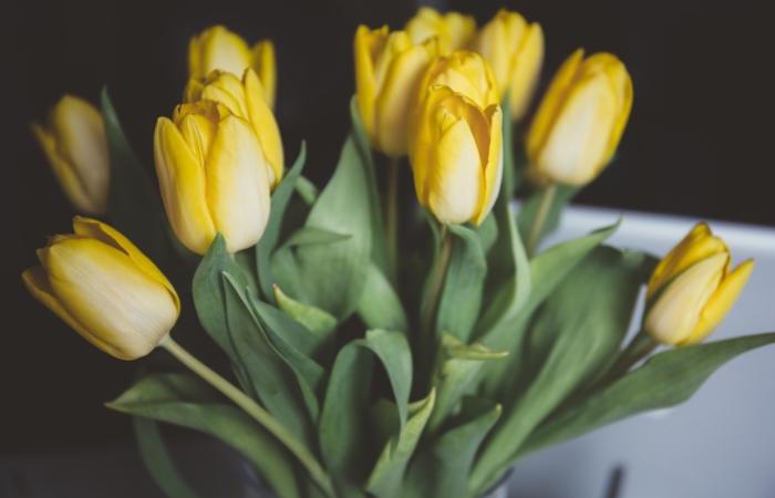 10 nippi, kuidas kevad tuppa tuua